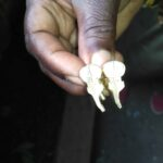 Zwei Paare maßgefertigte Manschettenknöpfe waehrend der Massanfertigung