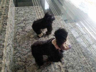 Kleine Berggorillas Stofftiere waehrend der Massanfertigung