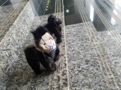 Small mountain gorilla stuffed animal within custom made realization